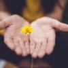 お花のプレゼントの画像